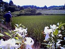 midorinoumi1.jpg